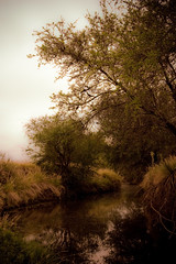 El Arroyo ( SandroG) Tags: naturaleza parquesnacionales rain nationalpark lluvia entrerios elpalmar villaelisa sandrog sandrogarcia safaribaelpalmar