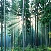 Directory of all my 12,000 flickr photos (Andreas Helke) Tags: trees 2 mist nature topv111 forest square bravo europa europe y fav50 topv1111 gimp fav20 h rays fav franken fav30 landschaft picnik twa directory quadrat fav10 v1000 ochsenkopf candreashelke fav100 worldsfavorite fav40 smartsharpening skriptfu hgermany fav5andmore fav2andmore hnature hforest 20100326212 20100326283 20100326294 20100327456 20100401647 20100402798 20100403899 201040610110 popularold 2010051522120 candreashelke2 upload2011 gotnoticedagain hpopular 2011upload