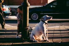 Kid and Dog (- yt -) Tags: sunset australia westernaustralia kidanddog otherkeywords fremantole
