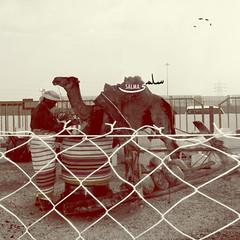 [2] (Salma Alzaid ) Tags: heritage culture saudi antiques 2010  askme              salmaphotography aljnadria httpwwwformspringmemlg0o0fa salmaz