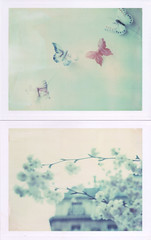 Spring promises. Flying. Away. (emilie79*) Tags: spring butterflies polaroid180 iduvfilm