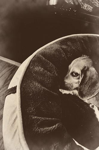 sly dog.