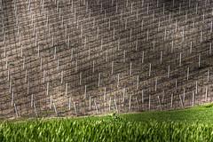 Spotlights on the vineyard (Leonardo Del Prete) Tags: light italy sun vineyard ground soil peek marche