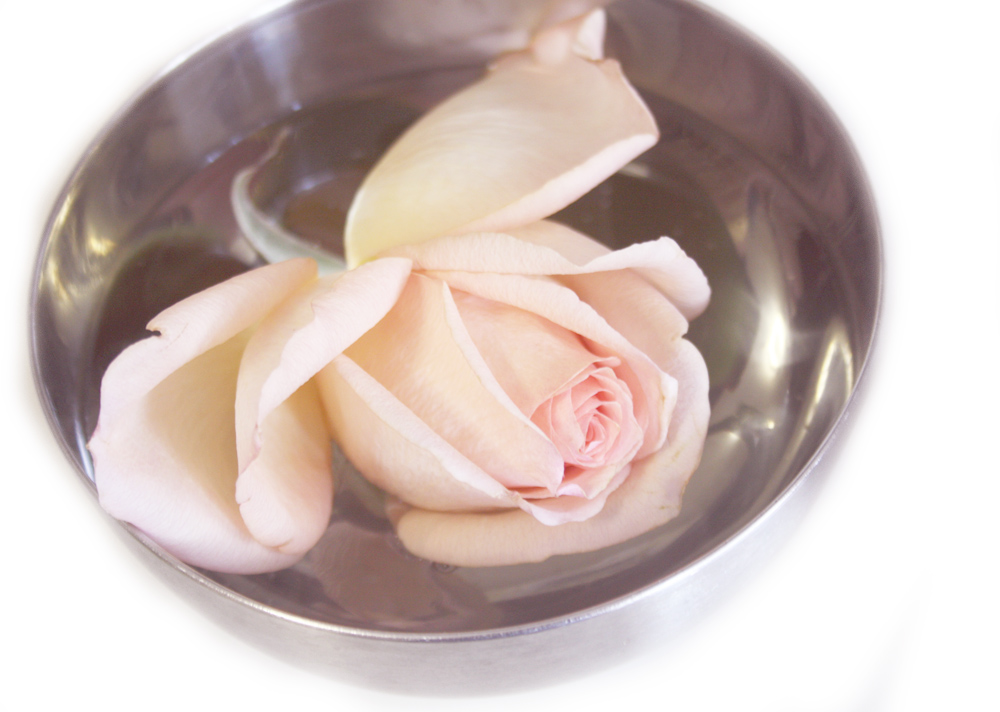 rose in a bowl