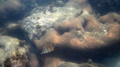 koh Samui Snorkel chaweng beach south サムイ島 チャウエンビーチ南でスノーケル2