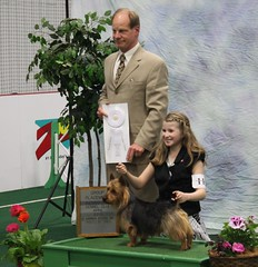 Ellie and Beckham 4th place Terrier Group