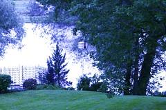 Landscape In Blue (bigbrowneyez) Tags: trees leaves branches feelingblue birdfeeder treetrunk heavenonearth greengrass shadesofblue bluelandscape rodironfence flickrnature littlepieceofheaven waterwet seeingblue
