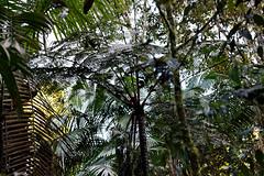 baudchon-baluchon-mindo-foret-equatoriale-10