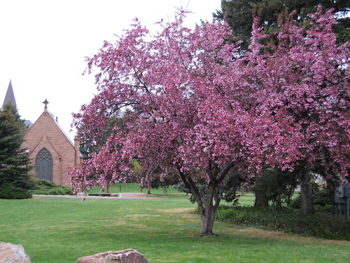 Tree and chapel, DU campus