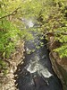 Down into the deep (andyXchrist) Tags: nature spring outdoor bronx nybg springgreen zn5