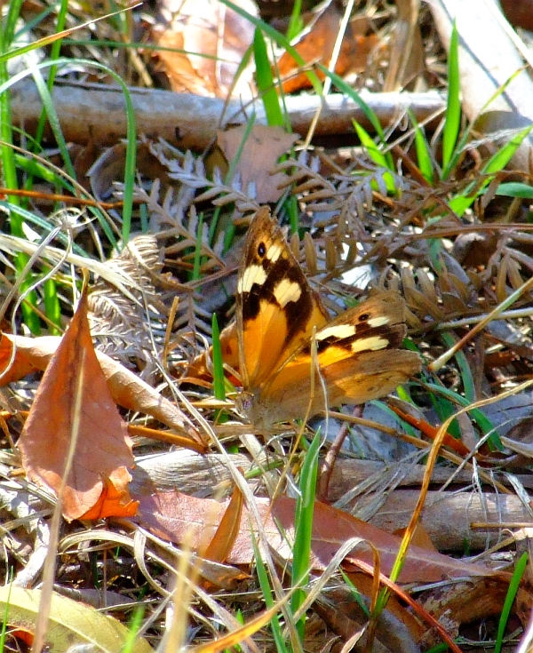 hidden butterfly02