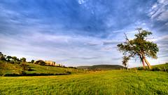 Vista of a green field