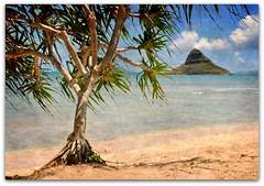 tradewinds (beesquare) Tags: hawaii oahu chinamanshat tradewinds kaneohebay mokoliiisland kualoaregionalpark