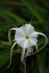 Flores Silvestres (Jorge De Silva R) Tags: