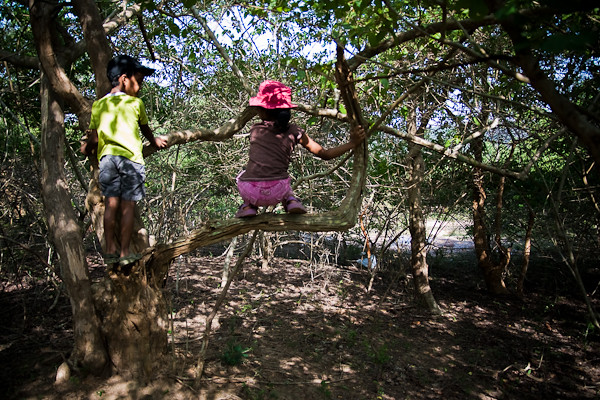 Climbing trees in Summer - Chitra Aiyer Photography