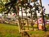 P1030383 (mark-vauxhall) Tags: summer music tree festival festivals glastonbury frame glastonburyfestival musicfestival glasto parkfield parkstage glastonbury2009