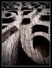 No6 (hoho0482) Tags: wood 6 no carving six macromondays