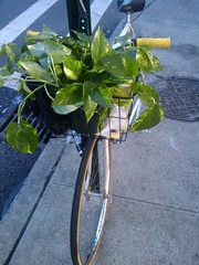 Brooklyn Plant Transport