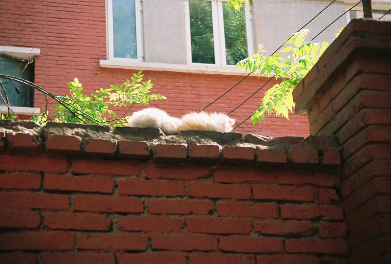 院子 猫咪3