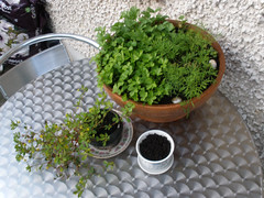 3rd June - garden update