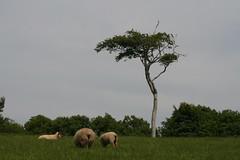Lone (Terry Moran aka Tezzer57) Tags: ireland tree green grass tinternabbey cowexford