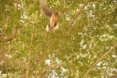 '6ANNIK A7AD 6AR !? (Anda Al-Saud) Tags: 3 tree bird anda alsaud anoud a7ad 6ar 7amamah 6annik 3anda