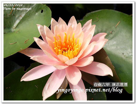 蓮花世界R0012572