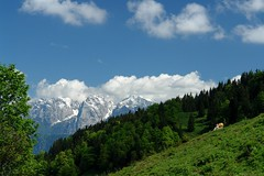Gr-Alm (WeatherMaker) Tags: mountains alps germany bayern bavaria cows alpen wilderkaiser brnnstein mangfallgebirge abigfave grosertraithen