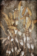 Horsetail (Y.H.P) Tags: flowers flower  horsetail  imageourtime