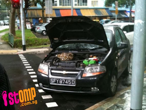 This python crawled up a car at a traffic junction when light was red