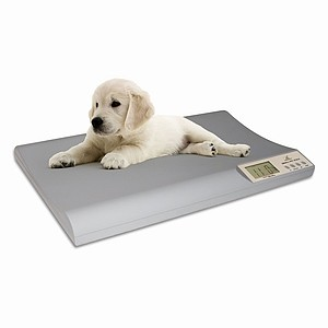 Breaking the Scale: The problem of pet obesity