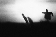 Falling light, rising shadows (Effe.Effe) Tags: sunset bw monochrome silhouette atardecer tramonto mood sonnenuntergang wheat scarecrow grain bn pôrdosol espantapájaros trigo grano spaventapasseri grana blé coucherdusoleil espantalho épouvantail weizen spighe vogelscheuche