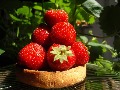 studie en aardbeien 014