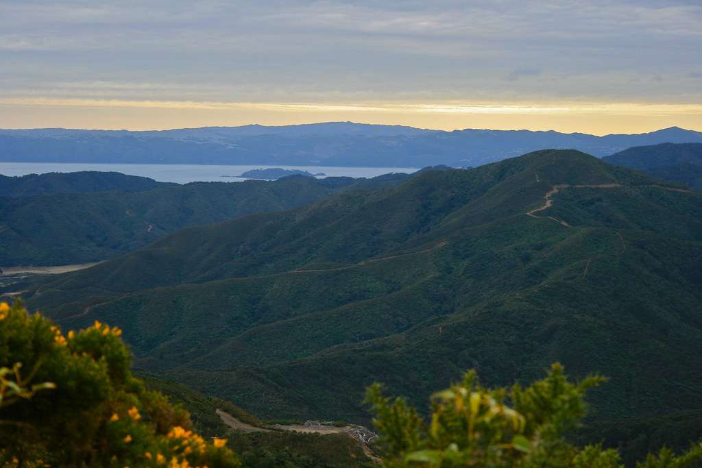 Wellington harbour from Rimutaka Forest Park, Wellington region, New Zealand