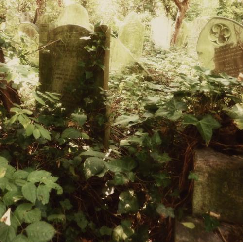 Nunhead Cemetery 6~ gravestones