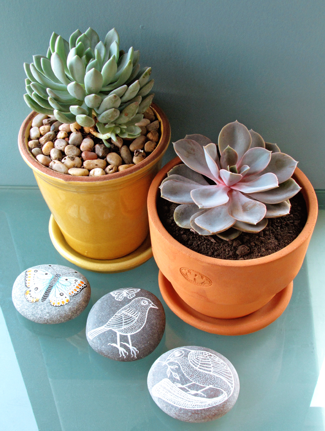 Succulents and stones