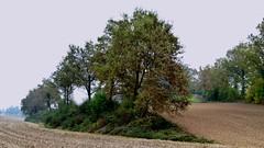 I colori dell'autunno (BORGHY52) Tags: italy nature piemonte autunno collina ottobre pralormo