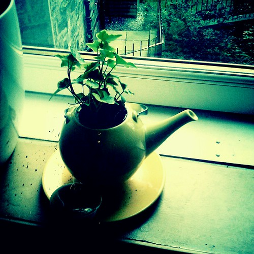 Teapotplant