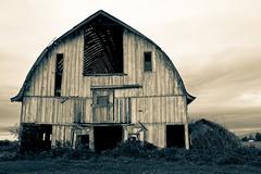 Abandoned barn (mfeingol) Tags: abandoned rotting barn farm valley skagit derelict rundown skagitvalley skagitcounty