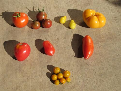 Tomato art?