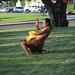 Fire dancer at the 2008 SPB Luau.