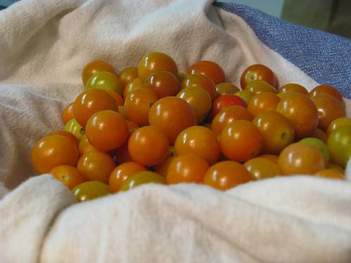 pomodorini arancioni