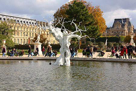 Arbre Louvre