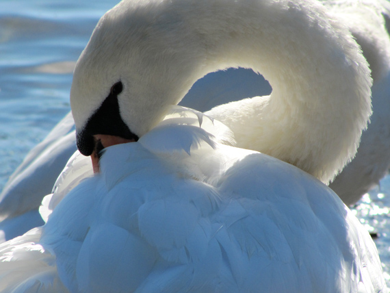 101112_Wasservögel_01