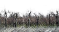 B O S Q U E C E R E Z O 1 (creonte05) Tags: explore eduardomiranda flickr 2017 nikon d7100 nature naturaleza chile curico 2485mmf284d ngc explored experimental exteriores icm art blur paisaje arte landscape rural