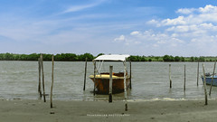 Ferry on shore (dtrajan) Tags: beach nature sunshine tamilnadu banks beauty bliss blues boat bushes clouds colors ferry forests green greens landscape light mangroove matte outdoor photography pichavaram river rivers sand scenic sea shore skies south travel traveldairies trees
