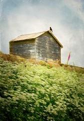 Foxglove (vesna1962) Tags: scenery shed hut hill foxglove bird blackbird horizon wildflowers queenanneslace plant nature textured sky