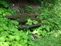 Un banc dans la verdure (JMVerco) Tags: banc bench panchina vercopictureme suisse switzerland swizzera flickrchallengegroup