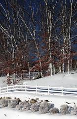 Winter Wonderland (cybersooz) Tags: christmas winter snow lexington massachusetts newengland 2009