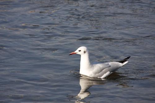 An oyster bird